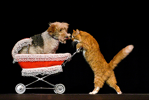 Comedy Pet Theater cat with dog