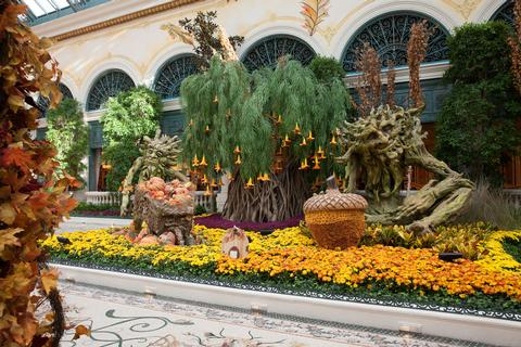 Bellagio Conservatory Harvest 2017 5 low