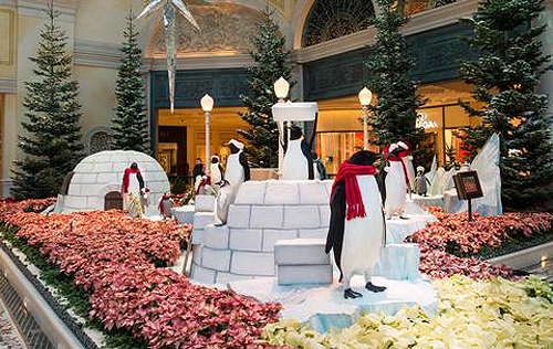 Bellagio Conservatory Penguins low